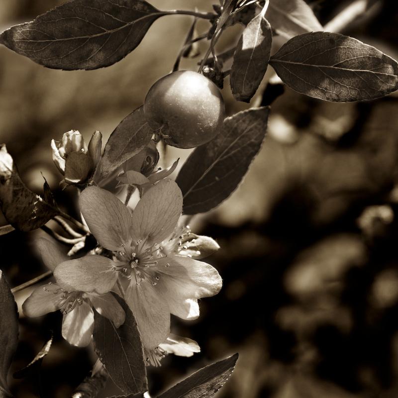 blute_und_fruchte-crw_9294-7.jpg