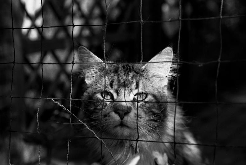 kleiner_tiger-17-25.jpg